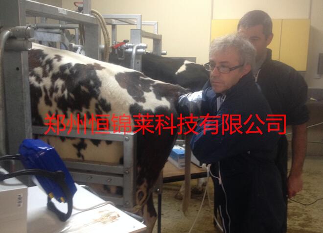 牛用B超机提高母牛妊娠采卵