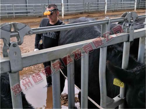 恒大大方县养牛场培训进口B超机