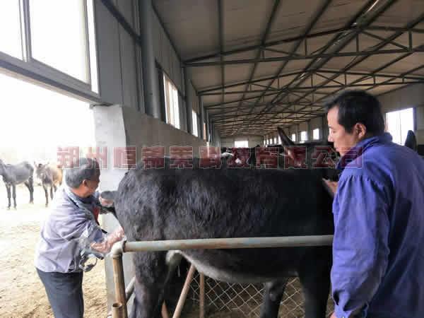 恒锦莱技术老师--洛阳驴场进行培训