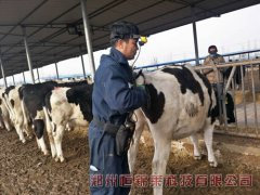 宁夏骏华牧业试用进口奶牛用B超机
