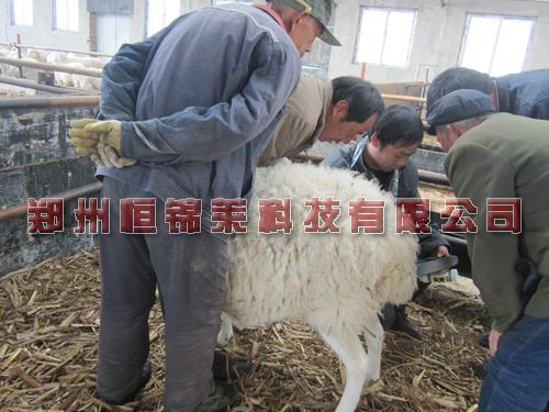 便携式羊用B超机培训使用方法