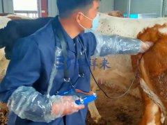 安徽牛场培训兽用B超BXL-V50的使用方法