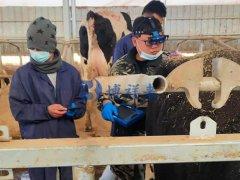 培训宁夏养牛客户使用牛用B超机