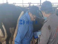 甘肃白银奶牛场培训牛用B超使用方法